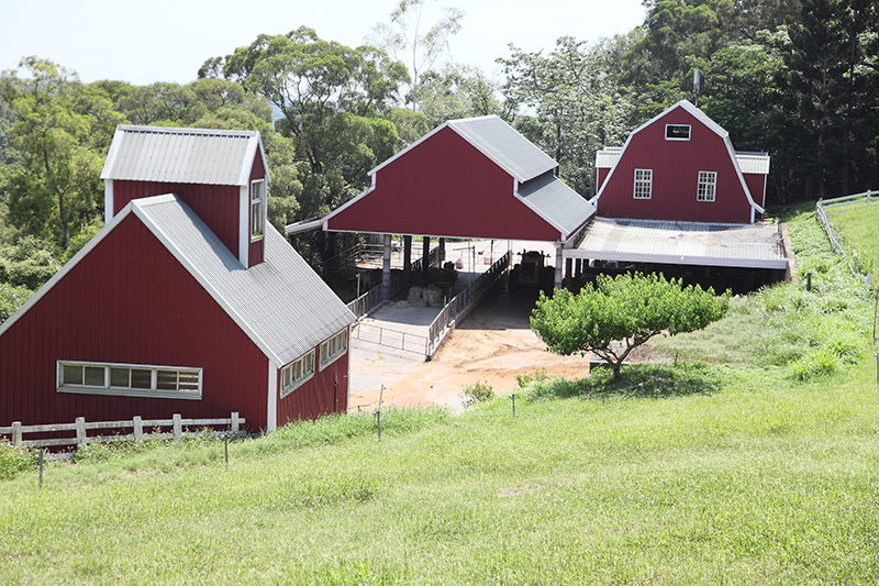 孩童夢想的飛牛 Flying Cow Ranch